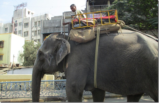 Elephant in Pune