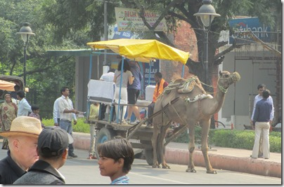 Camel cart in Agra