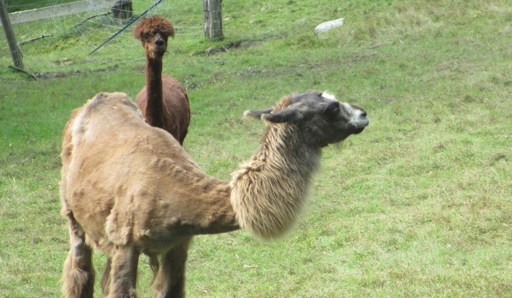 Food fernando salazar for Alpaca view farm cuisine